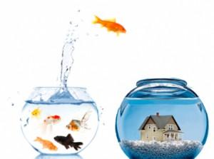 fish-jumping1