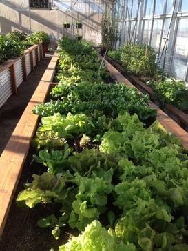garden bed2