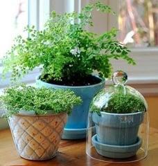 indoorplants3